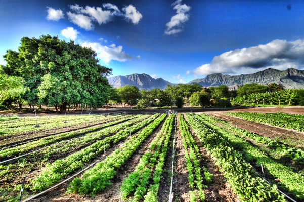 Organic-Farming-in-Promoting-Sustainable-Living